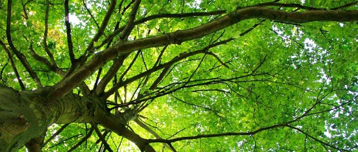 Bijzonder werk bomen | Soontiëns Boomverzorging