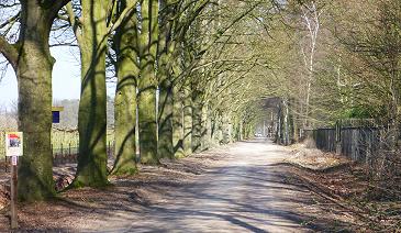 Bomen effect analyse